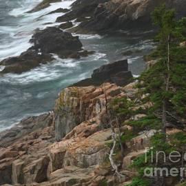 Juergen Roth - Rocky Shoreline of Acadia National Park