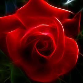 Cindy Wright - Romantic Red Rose