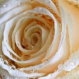 Tracy  Hall - Rose Swirl