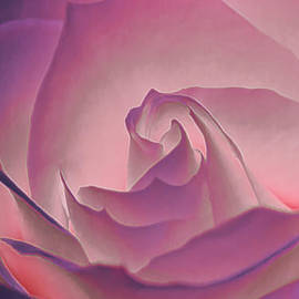 Linda Tiepelman - Rosy Daydreamer