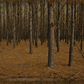 M K  Miller - Rust Forest