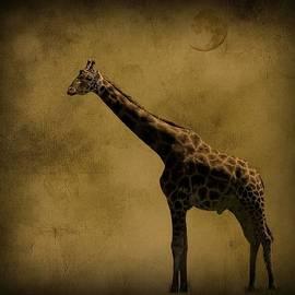 Diane Schuster - Safari Moon