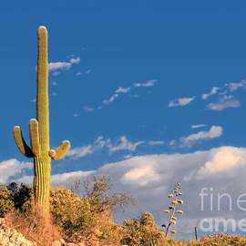 Christine Till - Saguaro cactus - Symbol of the American West