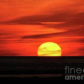 Al Powell Photography USA - Seagull Sunset
