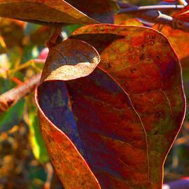 William Kaluta  - Season Of Colored Leaves 2  William Kaluta Photography