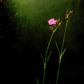 Silvia Ganora - Seeking light