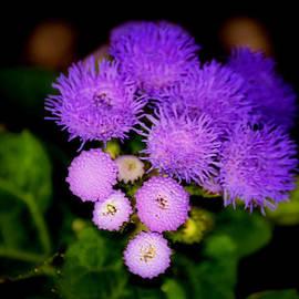 Karen M Scovill - Shades of Purple