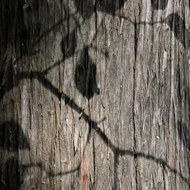 Doris Potter - Shadow Leaves