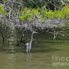 Al Powell Photography USA - Shady Heron