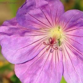 Sonali Gangane - Shimmer Flower
