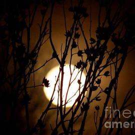 Judy Via-Wolff - Shoot the Moon Three
