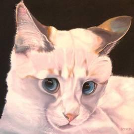 Susan A Becker - Siamese Rescue - Gem of a Kitten