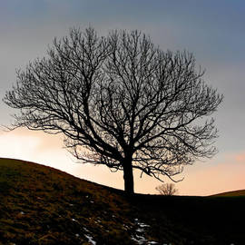 Christine Till - Silhouette of a tree on a winter day