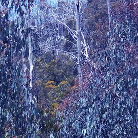Alison Lee  Cousland - Silver Snow Gums