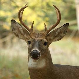 Michael Peychich - Six Point Whitetail 0333