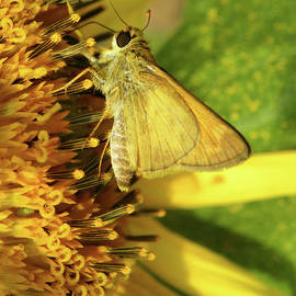Sandi OReilly - Skipper And Sunflower