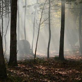 Robert Green - Smokey Woods
