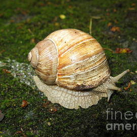 Ausra Paulauskaite - Snail crossing the path 01