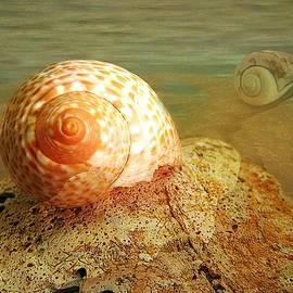 Shirley Sirois - Snailing Around