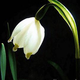 Jerry L Barrett - Snowflake Flower