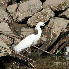 Al Powell Photography USA - Snowy Egret Fishing