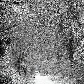 Linsey Williams - Snowy path