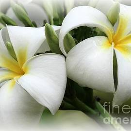 Sabrina L Ryan - Soft and Delicate Plumeria