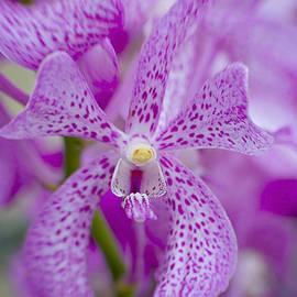 Jacky Parker - Soft on Orchids