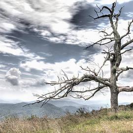 Michael Clubb - Solemn Tree