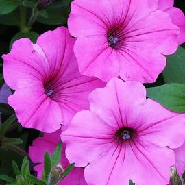 Bruce Bley - Spectacular Pink
