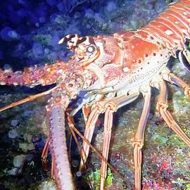 Barry Jones - Spiney Lobster