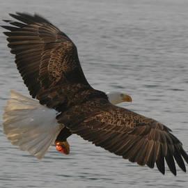 Kym Backland - Spread Eagle