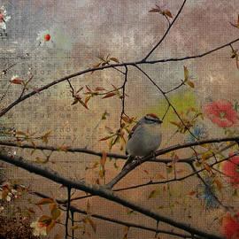 Todd Hostetter - Spring Bird
