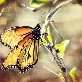 Saija  Lehtonen - Spring Butterflies