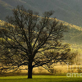 Daniel Dempster - Spring Morning in Cades Cove - D003803a