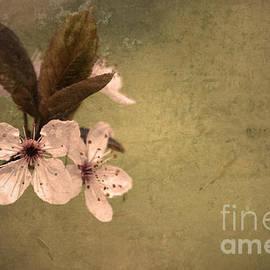 Tara Turner - Spring Solitude
