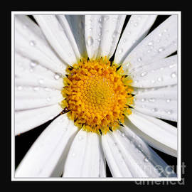 Kaye Menner - Square Daisy - Close up 2