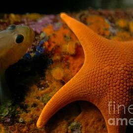 Mitch Shindelbower - Starfish And Friend