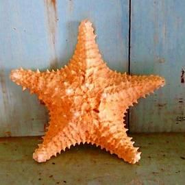 Joan Meyland - Starfish