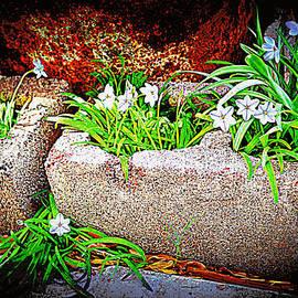 Diane montana Jansson - Stoney Spring