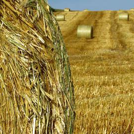 Andrea Arnold - Striped Field