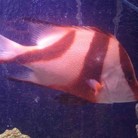 Val Oconnor - Striped Fish
