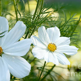 Reflective Moment Photography And Digital Art Images - Summer Beauties