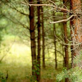Jenny Rainbow - Summer Forest. Pine Trees