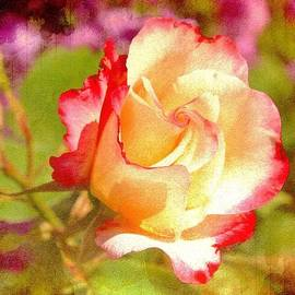 Cathie Tyler - Summer Rose with texture