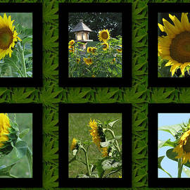 Debra     Vatalaro - Sunflower Collage