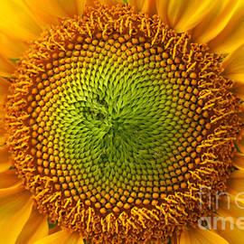 Benanne Stiens - Sunflower Fantasy