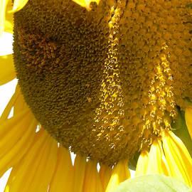 Pamela Patch - Sunflower Love