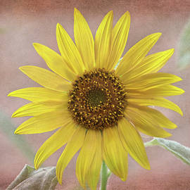 Sandi OReilly - Sunflower Warmth