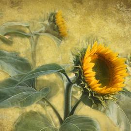David Arment - Sunflowers